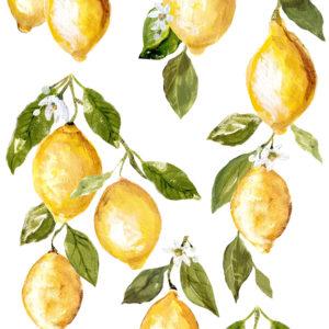 IOD DT Lemon Drops