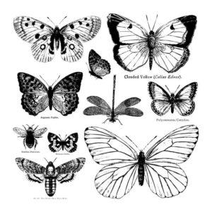 Tampon Butterflies