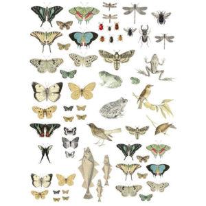 transfert-entomology-etcetera-iron-orchid-designs
