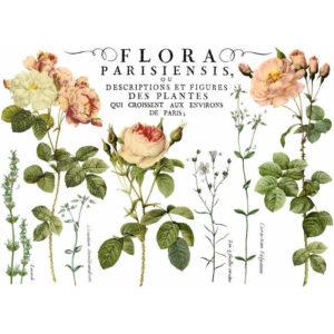 transfert-flora-parisiensis