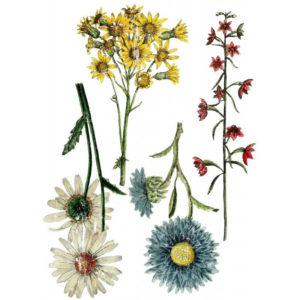 transfert-wild-flower-botanical-iron-orchid-designs